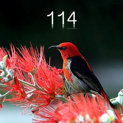 Numerología 114 / Significado del número 114