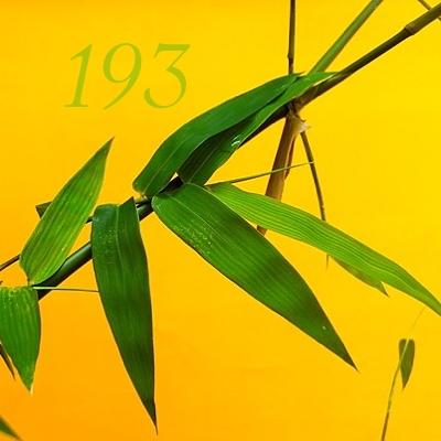 Numerología 193 / Significado del número 193